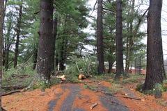 Упаденные деревья Стоковые Фото