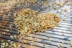 Упаденные желтые листья гинкго на земле Стоковое фото RF