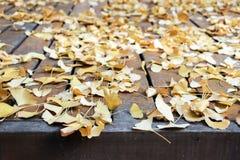 Упаденные желтые листья гинкго на земле Стоковое Изображение RF