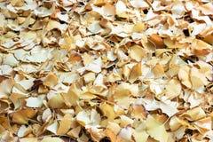 Упаденные желтые листья гинкго на земле Стоковое Изображение