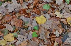 Упаденные листья в осени, южная Богемия стоковое фото rf