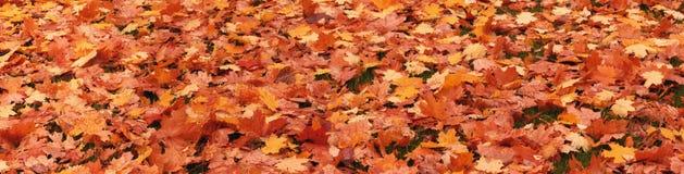 Упаденные листья деревьев стоковое изображение
