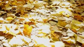 Упаденные листья желтого цвета на солнечный день сток-видео