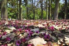 Упаденные листья и цветки в Валенсии, Испания стоковые изображения