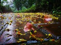 Упаденные листья красного цвета лежа на влажной земле Стоковое фото RF