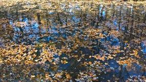 Упаденные листья на воде Стоковые Изображения
