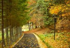 Упаденные листья осени на переулке парка Листва леса стоковые фотографии rf