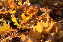 Упаденные листья осени на поле леса стоковое изображение