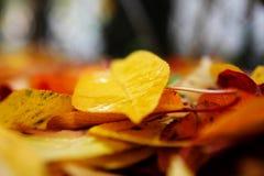 Упаденные листья осени стоковые фотографии rf