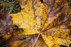 Упаденные листья падения в лесе Стоковое Фото