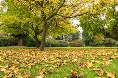 Упаденные листья с деревьев стоковое изображение