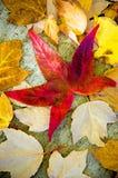 упаденные листья Стоковое Изображение
