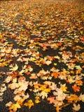 упаденные листья стоковые фотографии rf
