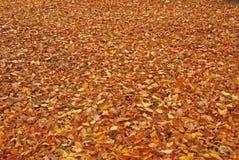 упаденные листья Стоковые Изображения