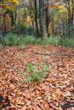 упаденные листья стоковое фото rf