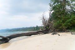 Упаденные стволы дерева и driftwood Стоковая Фотография