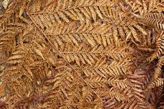 Упаденные сухие fronds папоротника дерева Стоковые Изображения