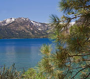 упаденные california листья озера Стоковая Фотография RF