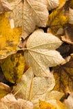 упаденные waterdrops листьев Стоковые Изображения RF