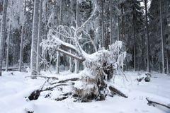 упаденный вал корня Стоковое Изображение