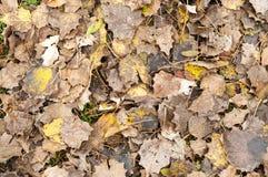 Упаденный желтый цвет выходит на том основании в осень Стоковая Фотография RF