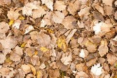 Упаденный желтый цвет выходит на том основании в осень Стоковое фото RF