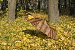 упаденный зонтик листьев Стоковое Изображение