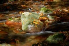 упаденный камень листьев стоковые фото