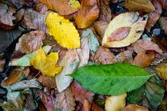 Упаденный листопад на том основании Стоковые Фотографии RF
