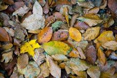 Упаденный листопад на том основании Стоковые Изображения