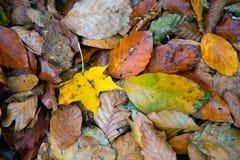 Упаденный листопад на том основании Стоковое фото RF