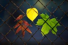 упаденный осенью провод листьев загородки Стоковые Фотографии RF