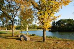 упаденный парк leaven Стоковая Фотография