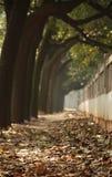 упаденный путь листьев Стоковое Изображение