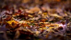 Упаденный распадаться листьев стоковые фото