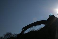УПАДЕННЫЙ СТВОЛ ДЕРЕВА ПРЕДСТАВЛЕННЫЙ НАД УТЕСОМ Стоковое Изображение RF