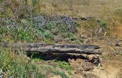 Упаденный сук дерева на предпосылке забывать я не цветки Стоковое Изображение