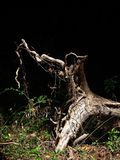 упаденный экологичностью вал корней проблем Стоковая Фотография