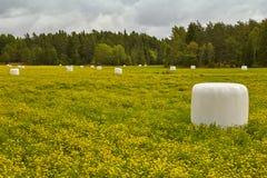 Упакованный silage на сельской местности зеленый желтый цвет ландшафта Стоковое фото RF