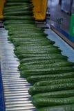 Упаковка больших зрелых огурцов длинного зеленого цвета для транспорта, био стоковые изображения