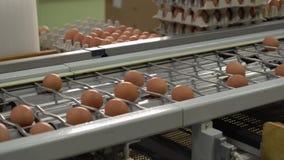 Упаковка цыпленка фабрики яйца сток-видео