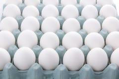 Упаковка яичка изолированная на белой предпосылке Стоковое фото RF