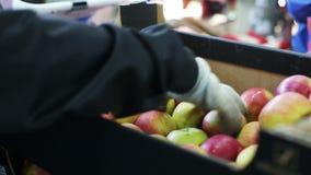 Упакуйте желтые яблока в пакеты, в сумках сток-видео