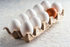 Упакуйте различную яичка белая и одна бежевой коричневой концепции вредная противоестественная другой расизм Стоковая Фотография