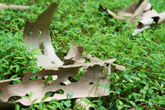 Упаденная кора дерева сарая Стоковые Изображения RF