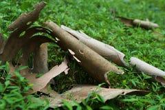Упаденная кора дерева Стоковая Фотография