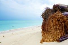 Упаденная пальма Стоковое Изображение RF
