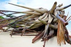 Упаденная пальма стоковая фотография rf