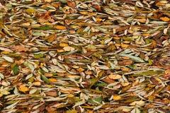 упаденная поверхностная вода листьев Стоковое Изображение RF