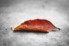 Упаденная предпосылка природы лист Стоковая Фотография